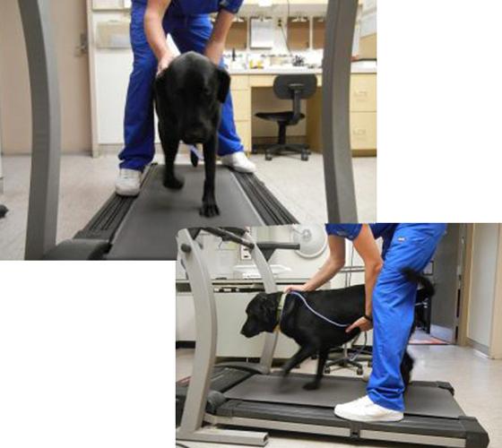 canine physical rehabilitation mt pleasant sc